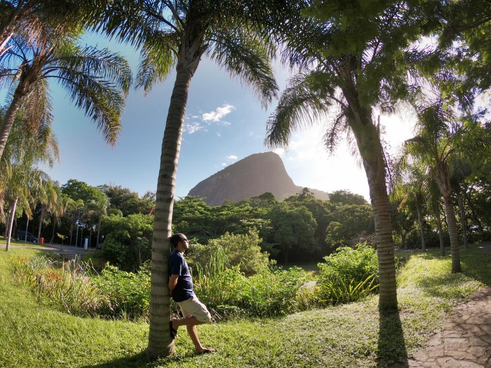 Palmeiras do Parque